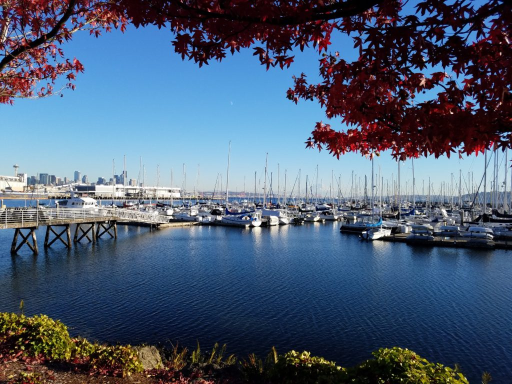 Elliott Bay Marina Autumn